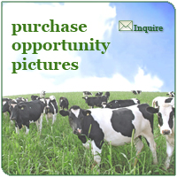 Purchase Opportunity Pictures